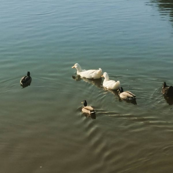 Çiğli-Sasalı Kuş Cenneti