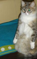 Penguen ruhlu kızım:))