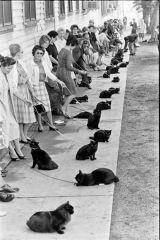 Kediler ve Cadılar