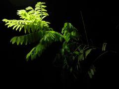 gece ve doğa