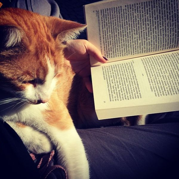 En çok sevdikleri..Kitap ve kedi