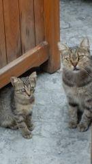 Yavrularımdan uzak dur bakışı:)