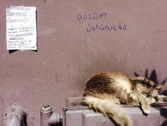 Bizim İstanbul-İzmir hattı kedileri