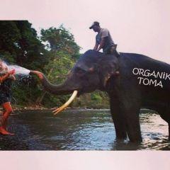Organik Toma!