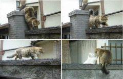 Aşk engel tanımaz:)