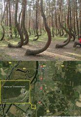 Eğri Orman