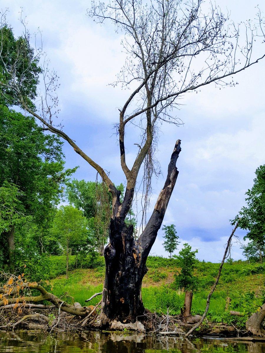 Üzgün Ağaç - Yeşilin Elli Tonu
