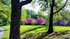 Renkler ve Doğa - Yeşilin Elli Tonu