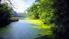 Organik Büyüme - Yeşilin Elli Tonu