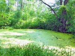 Organik Büyüme 2 - Yeşilin Elli Tonu