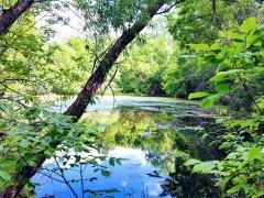 Su ve Yeşil - Yeşilin Elli Tonu