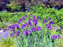 Güzelleme 2 - Yeşil ve Diğer Renkler