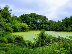 Geri Dönüşüm - Yeşilin Elli Tonu