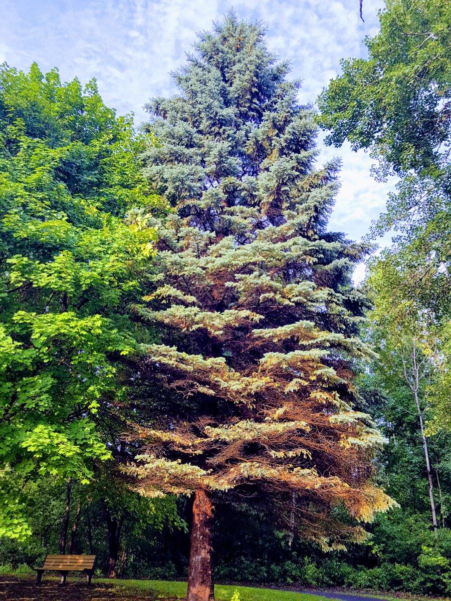 Bir Garip Çam Ağacı - Yeşilin Elli Tonu