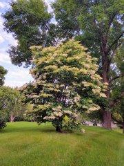 Çiçekli Ağaç - Yeşilin Elli Ton