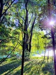 Gölgeler ve Yeşil - Yeşilin Elli Tonu