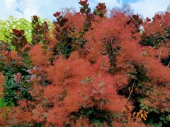 Örümcek Ağı Gibi Ağaç - Yeşilin Elli Tonu