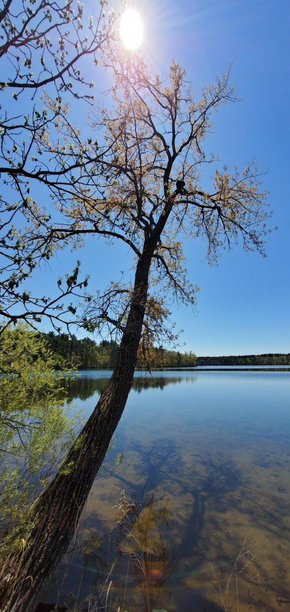 Güneş, Göl, Yeşil ve Güzel Bir Fotoğraf